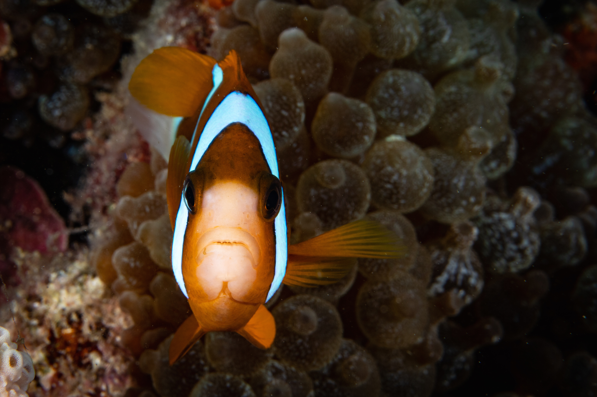 Advanced Underwater Photography with Colin Baker, CameraPro & Sunreef