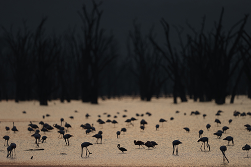 Flock of water birds silhouetted against sunlit water, photographed on the Canon 1DX III