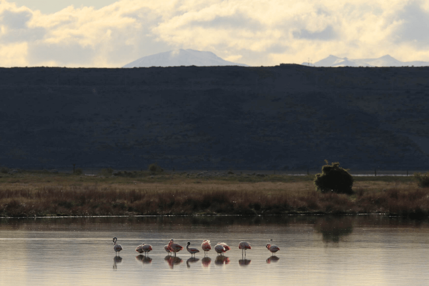 A row of birds standing in water with a steep grassy slope and clouds in the background, photographed with the Canon 80D