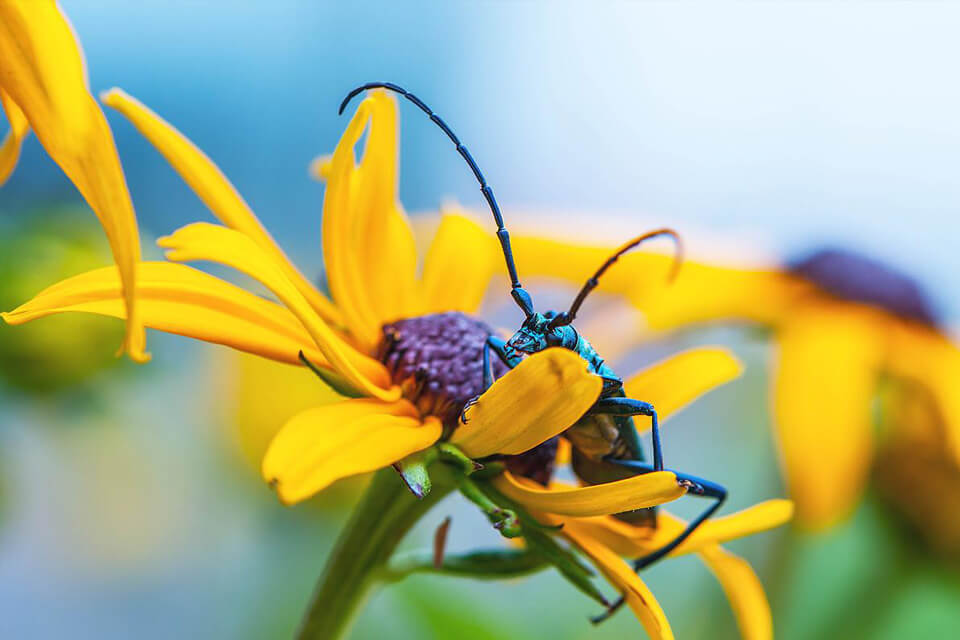 Insect sitting on yellow flower, photographed with the Nikon 105mm macro lens