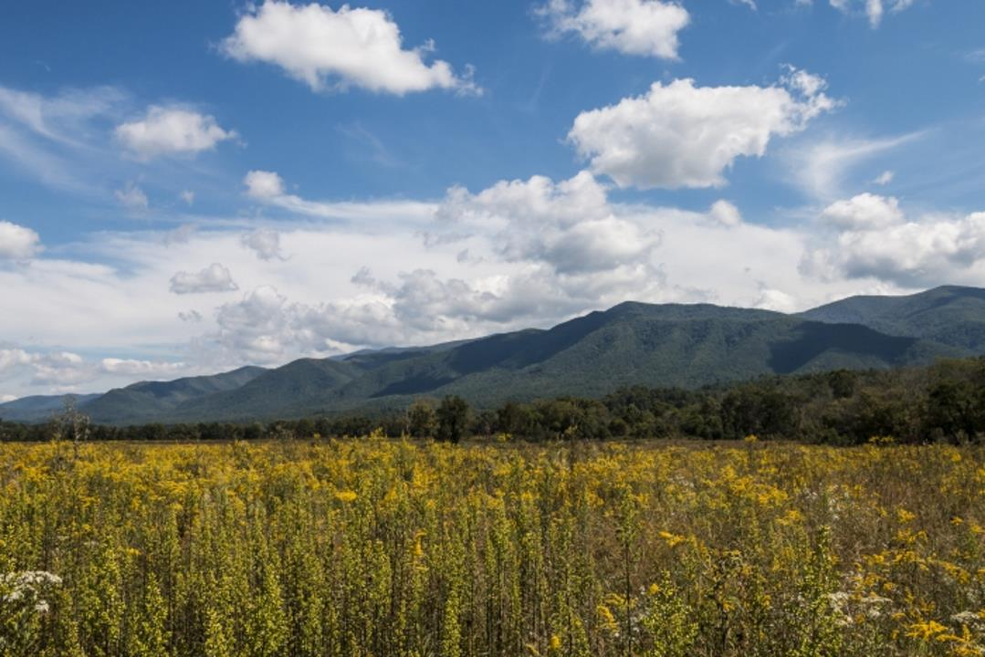 Wild meadow and distant mountains under a cloudy blue sky, photographed with the Sigma 18-35mm f1.8 DC HSM Art Lens for Nikon