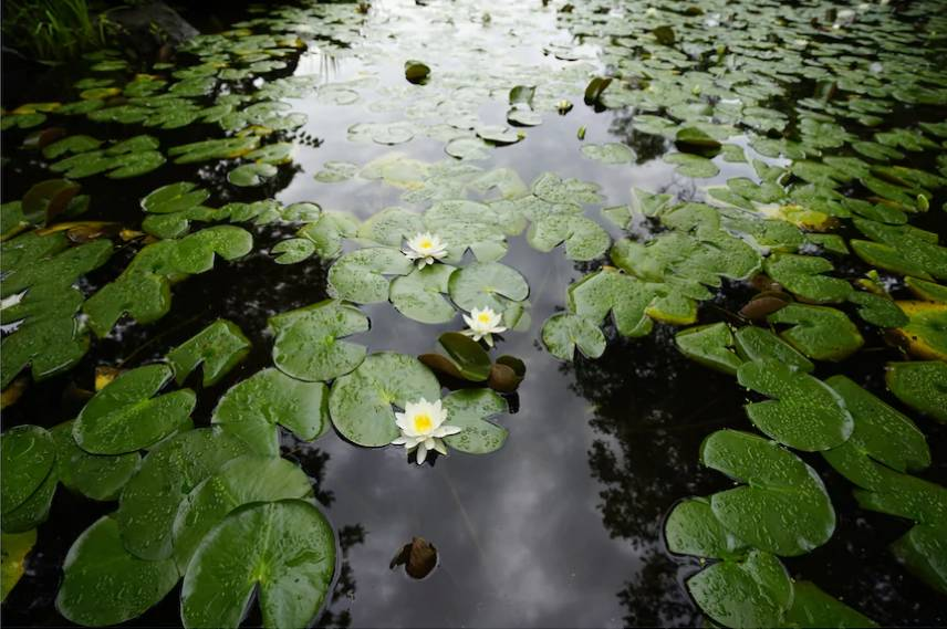 Light from the sky reflecting off a pond full of lily pads, photographed with the Sony 16-35mm f4 lens