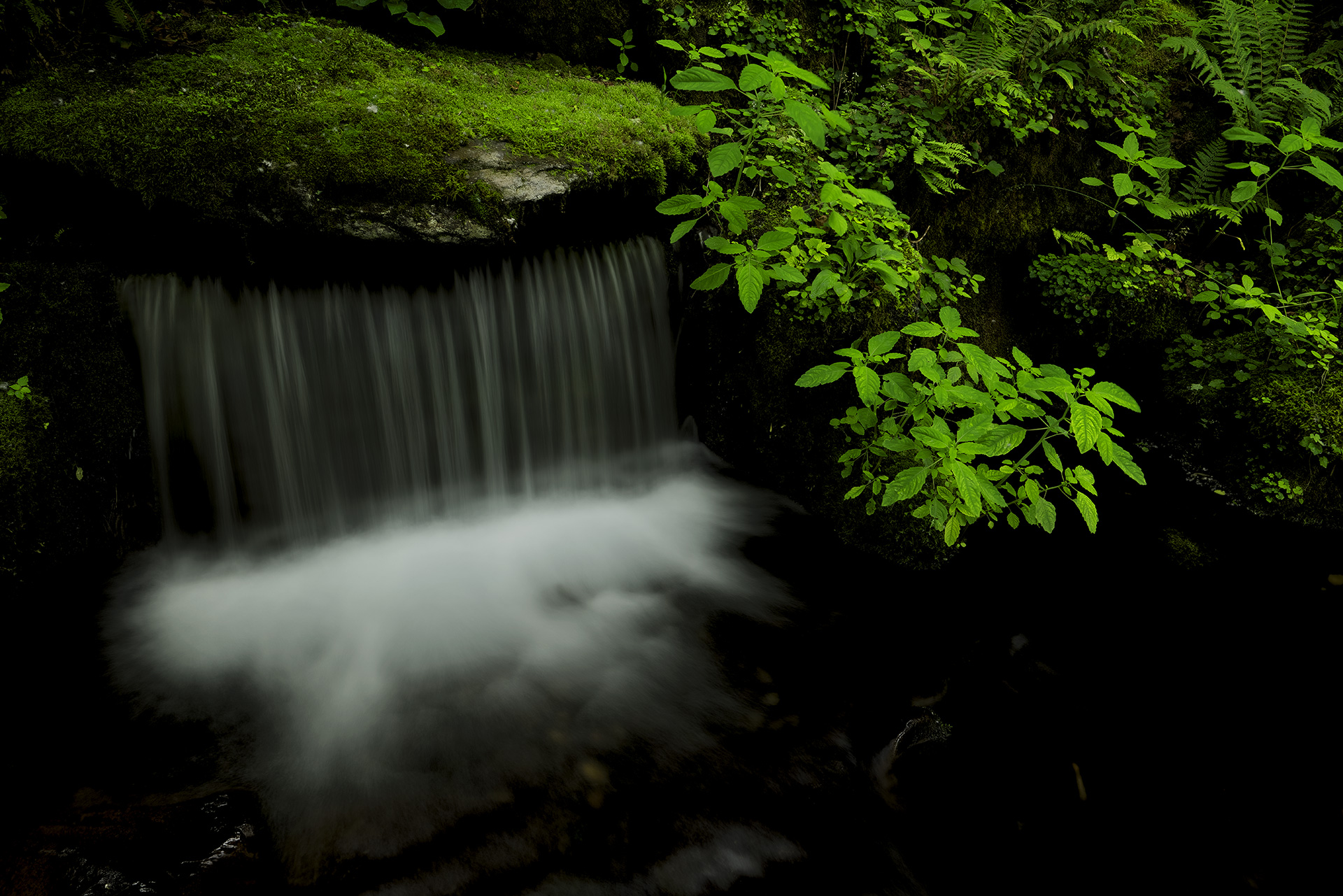 View towards waterfall with green leaves in foreground, photographed using Panasonic Lumix S PRO 24-70mm f2.8 lens